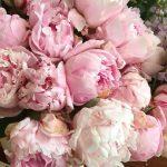 Peonies for Josie peonyporn instaflowers weddingflorist blossemyorkshire weddingprep