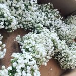 Wedding prep gypsophilagarlands ripleycastle weddinginspiration weddingflorist blossemyorkshire instaflowers instalove instabridehellip