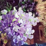 Surrounded by summer sweetpeas clematis astilbe meijerroses sweetavalanche dahilas daisieshellip